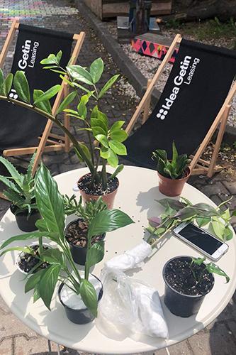 Zbliżenie na stolik, na którym stoi kilka roślin doliczkowych.